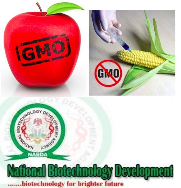 GMOs and Nigeria