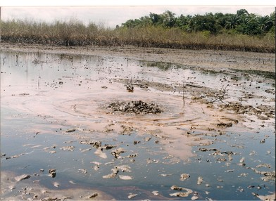 The oil spill in Bodo, October 2008. Independent experts estimate that more than 4,000 barrels of oil were spilled every day before the pipe was clamped. The oil killed much of the fish and shellfish in the creek. (PHOTO: CEHRD)