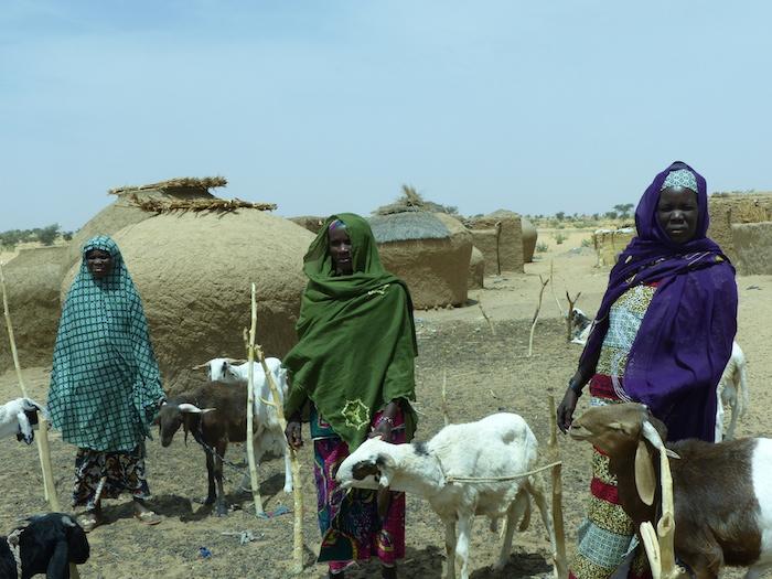 Des femmes du village bénéficiaires des moutons pour l'embouche. (PHOTO: ClimateReporters/Kané Illa)