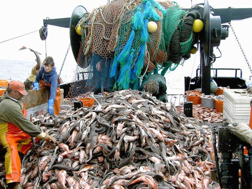 Crop-fish (PHOTO: ClimateNewsNetwork)