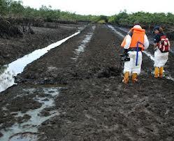 Farmland in Ogoni