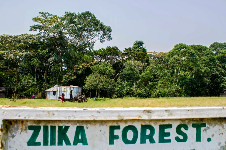L'entrée de la forêt Zika en Ouganda