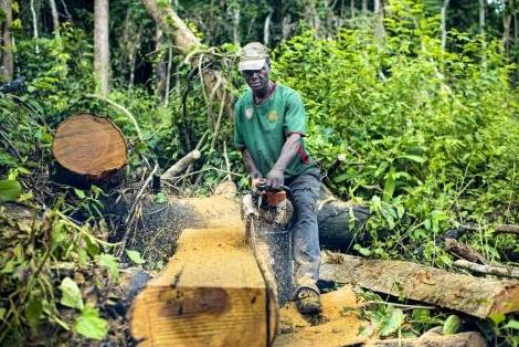 Exploitation forestière en RDC