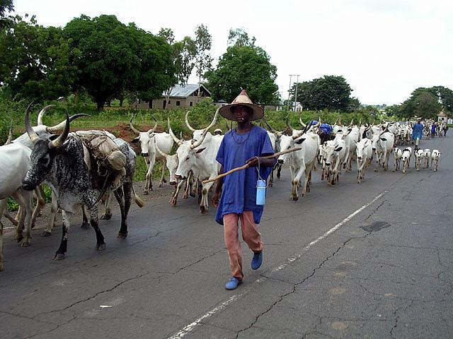 A fulani herdsman in Nigeria