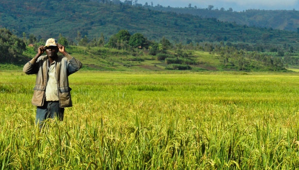 a rice farm in the East region in Cameroon (PHOTO: ClimateReporters/Elias Ntungwe)