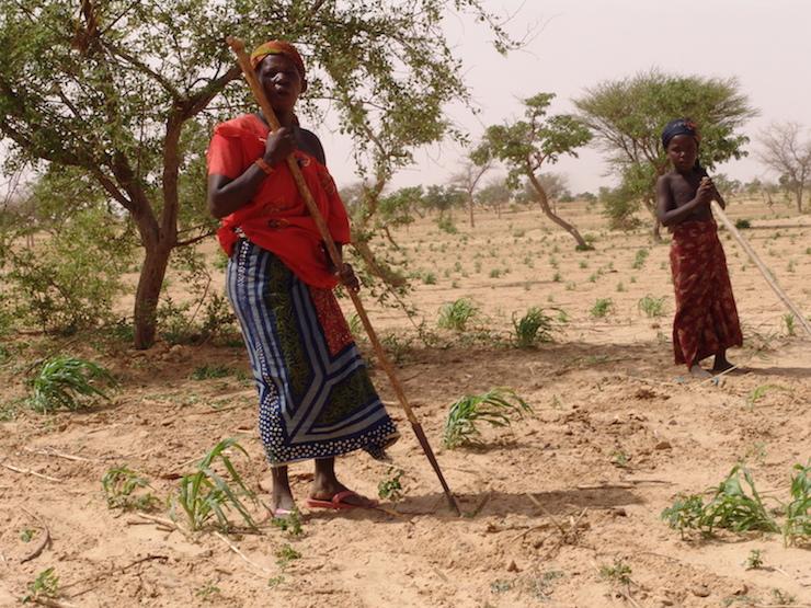 Femmes travaillant dans un champ expérimental à Mayahi (PHOTO: PNUD)