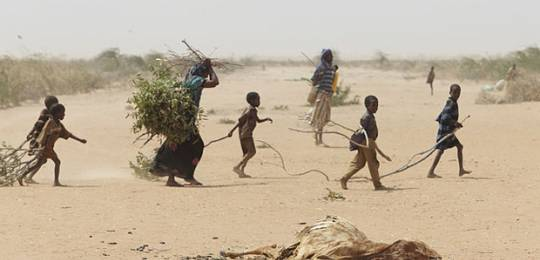A family in Dadaab gathers sticks and branches for firewood and to make a shelter (PHOTO: IIED)