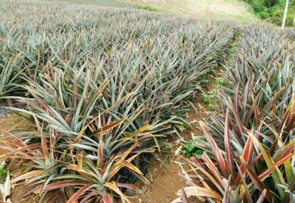 Bénin : L'agriculture menacée par les changements climatiques