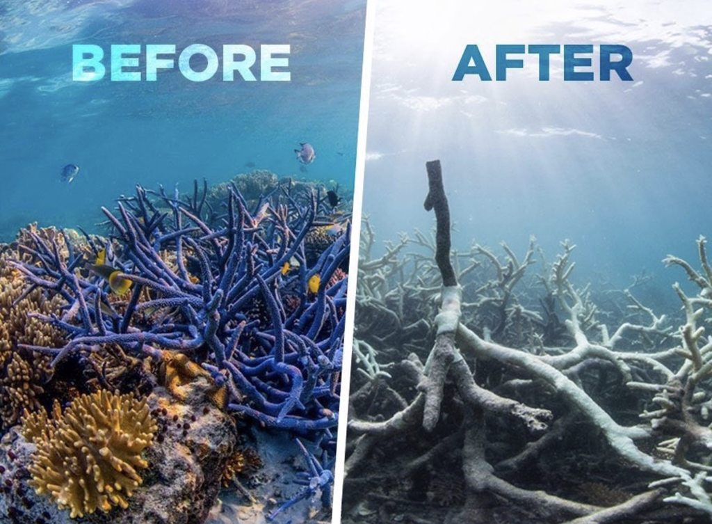 The 25 million-year-old Great Barrier Reef of Australia that almost passed away in 2016