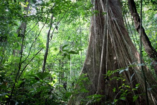 Nigeria's tropical rain forest