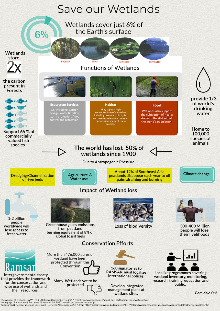 Saving our wetlands (Infographic by Bamidele Oni)