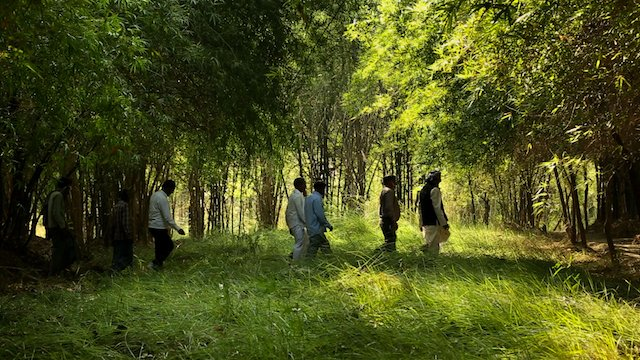 When a Grass Towers over the Trees - using bamboo to combat desertification (PHOTO: INBAR official)